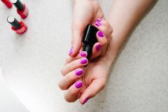 In the hands of gel nails, gel nail manicure primer base. Bank b. Lack. Nails purple, pink Royalty Free Stock Photo