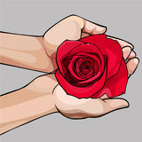 Hands gently holding a bud of a red rose. Hands gently holding a bud of red rose Stock Photography