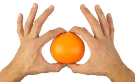 Hands gently holding an orange Royalty Free Stock Photography