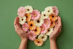 Hands of girl holding a heart of gerbera flowers Stock Images