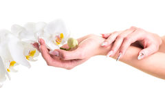 Hands of the girl holding an orchid on isolated white Stock Photos