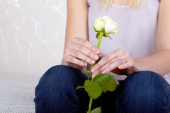Hands of a girl holds rose. Stock Photography