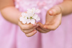 Hands of the girl and spring flower close up. stock photo
