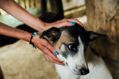 Hands of the girl stroked the dog homeless, street.  Royalty Free Stock Photos