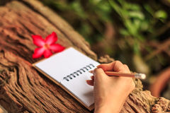 Hands of girl writing. With a pencil in notebook and Desert Rose standing on old wooden texture with green nature background. Closeup, Select focus Royalty Free Stock Photos