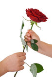 Hands giving and receiving a flower Stock Photography