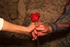 Hands Giving a Red Rose Royalty Free Stock Photo