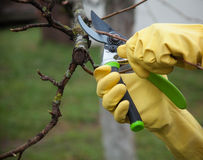 Hands with gloves of gardener doing maintenance work Royalty Free Stock Image