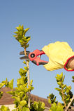 Garden work pruning bush sky background royalty free stock image