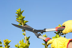 Garden work pruning tree sky background Royalty Free Stock Image