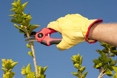 Garden work pruning hedge sky background royalty free stock images