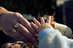 Hands grandmother and baby Stock Images