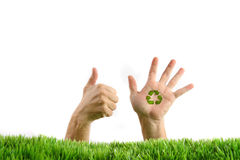 Hands in the grass on white. Background Royalty Free Stock Photography