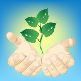 Hands and green plant Stock Photos