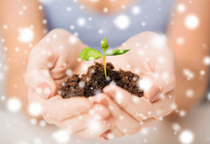 Hands with green sprout and ground Royalty Free Stock Images