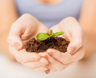 Hands with green sprout and ground Royalty Free Stock Photos