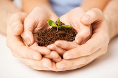 Hands with green sprout and ground Royalty Free Stock Photography