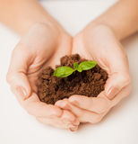 Hands with green sprout and ground Stock Photography
