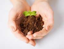 Hands with green sprout and ground Stock Photos