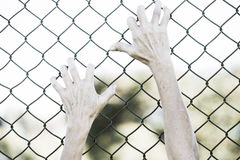 Hands gripped onto prison mesh wire fence. Bleached filtered image of Hands in desperate grip on mesh wired fence, symbolising captivity, hopeless, kidnapping Stock Photos