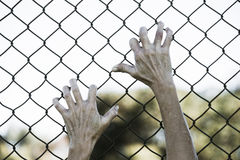 Hands gripped onto prison mesh wire fence. Bleached filtered image of Hands in desperate grip on mesh wired fence, symbolising captivity, hopeless, kidnapping Stock Photo