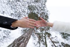 Hands of the groom and the bride against the background of tops of trees royalty free stock photography