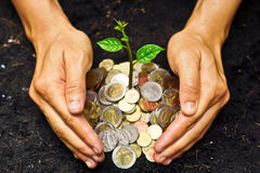 Hands growing a tree. Hands holding a tree growing on coins / save the world royalty free stock image