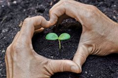 Hands growing a tree. Two hands forming a heart shape around a young plant / growing tree / save the world stock images