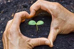 Hands growing a tree. Two hands forming a heart shape around a young plant / growing tree / save the world royalty free stock photos