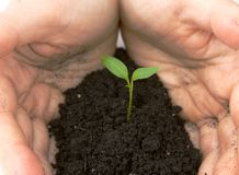 Hands guarding sprouting plant Royalty Free Stock Photos
