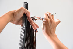 Hands of a hair stylist trimming hair with a comb and scissors Royalty Free Stock Image