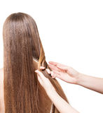 Hands hairdresser braid straight long hair isolated on white. Royalty Free Stock Photos
