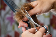 Hands of hairdresser trimming hair with scissors Royalty Free Stock Photo