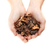 Hands with heap of dried mushrooms stock photos