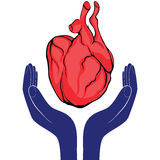 Hands and heart. Icon of kindness and charity vector valentine day Stock Photos