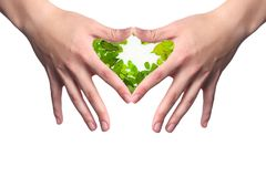Hands in a heart shape with a central nature Stock Photos