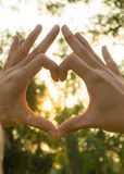 Hands in Heart Shape. On Tree and Sunset Background Royalty Free Stock Photography