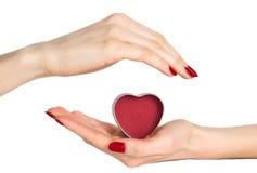 hands hjärta som rymmer den röda kvinnan arkivbilder