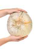 Hands hold fresh round pumpkin Royalty Free Stock Photos