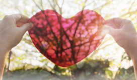 Hands hold or raise big red heart to sky with lens flare and sunlight Royalty Free Stock Photos