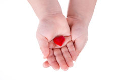 Hands hold a red heart on white Stock Photos