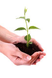 Hands hold  young plant. Human hands hold and a young plant Royalty Free Stock Images