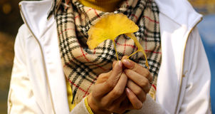 Hands holding autumn leaves. Closeup of human hands holding yellow autumn or fall leaves Stock Photos