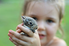 Hands holding baby bunny. Selective focus. Little girl holding baby bunny rabbit Stock Photography
