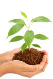 Hands holding baby plant Royalty Free Stock Photo