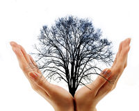 hands holding bare tree on white background Stock Image