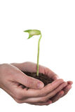 Hands holding a bean sprout Royalty Free Stock Photos