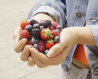 Hands Holding Berries Royalty Free Stock Image