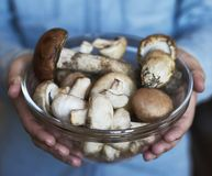 Hands holding big plate with mushrooms. Autumn harvest and healthy organic food concept stock image