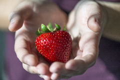 Hands holding a big specimen of strawberry with heart shaped. Stock Photography